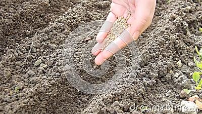 Sementes da sementeira na fileira com a mão vídeos de arquivo