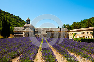 Senanque Abbey with lavender field