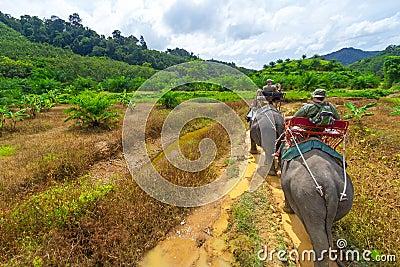 Senderismo del elefante en el parque nacional de Khao Sok Imagen editorial