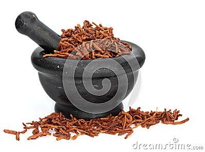 Senega Root Herb