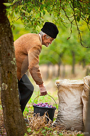 Senior farmer with a bucket