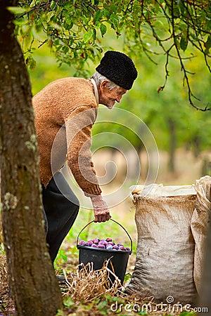 Senior farmer with a bucket