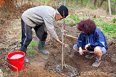 Senior farmer and daughter planting trees