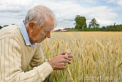Senior farmer in a field