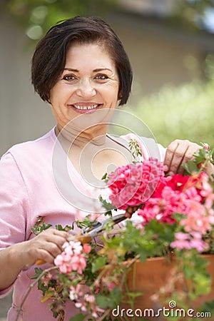 Free Senior Hispanic Woman Working In Garden Tidying Pots Royalty Free Stock Images - 54945359