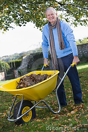 Senior man collecting leaves in wheelbarrow