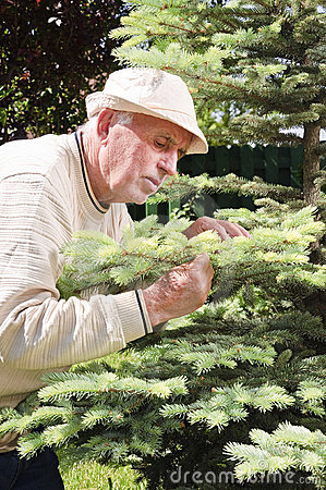 Senior man controlling tree disease