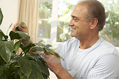 Senior Man Looking After Houseplant