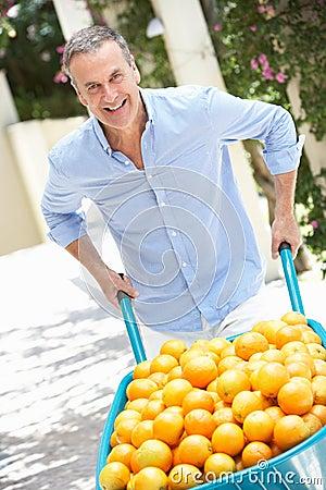 Senior Man Pushing Wheelbarrow Filled With Oranges