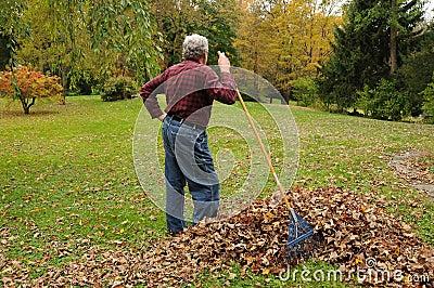 Senior Man Raking Leaves