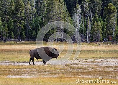 Buffalo prairie single parents