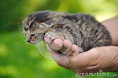 Senior s hands holding little kitten