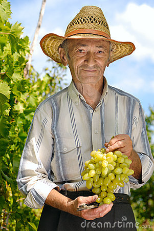 Senior winegrower