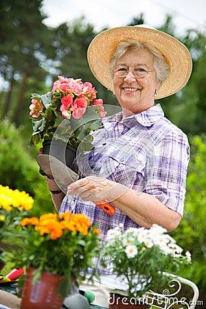 Free Senior Woman Gardening Royalty Free Stock Photo - 19760445