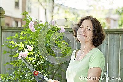 Senior woman pruning rose bush