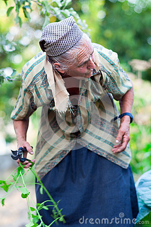 Senior woman in the vegetable garden