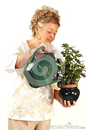 Senior woman watering plant.