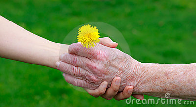 Senior and young hands holding a dandelion
