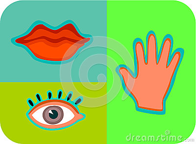 The senses of touch; taste; and sight