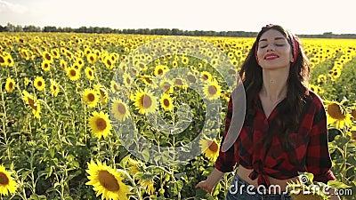 Sensual brunette girl walking in sunflower field stock video footage