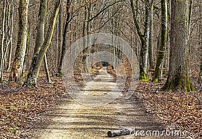 Sentier piéton dans une forêt