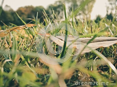Sepia Photography Of Grass During Daytime Free Public Domain Cc0 Image