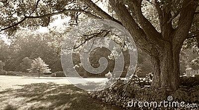 Sepia-toned park scene