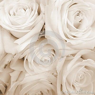 Free Sepia Toned White Roses Royalty Free Stock Image - 49056896