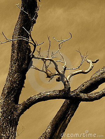 Free Sepia Tree Royalty Free Stock Images - 855549