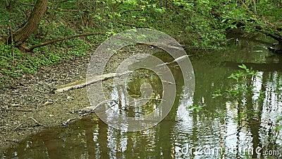 Sequía y secado río Morava agua, secar el suelo agrietado, un verano eutrofización cambio climático, medio ambiente almacen de metraje de vídeo