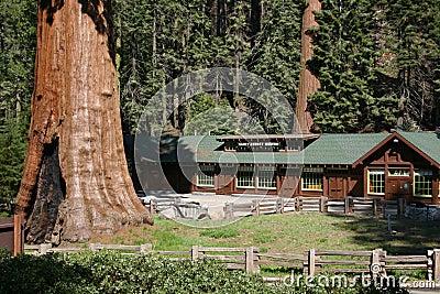 Sequoia Museum