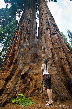 Free Sequoia National Park Royalty Free Stock Images - 8359399