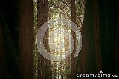 Sequoia Trail