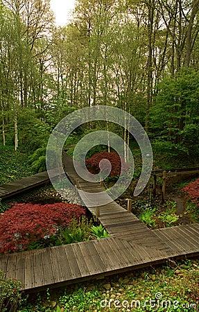 Serene forestscape