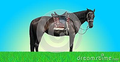 Serene horse