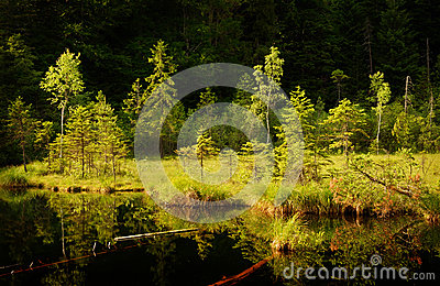 Serene lake in forest