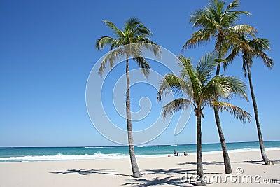 Serene Palm Beach