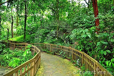 A serene and peaceful forested trail