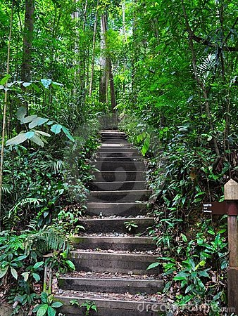 Serene and peaceful stairway in a forest