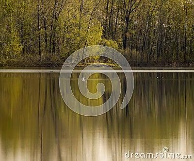 Serene scene forest