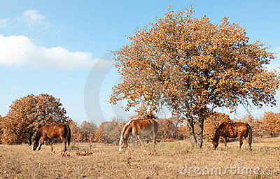 Serene scene of three horses grazing in au