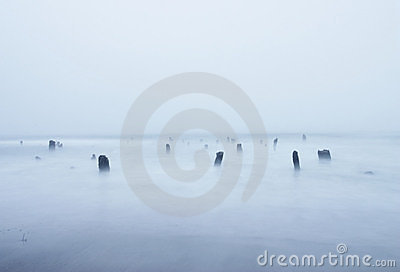 Serene Sea Coast Beach Waves and tree Stumps