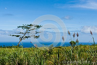 Serene view of blue ocean from green coast