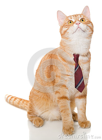 Free Serious Orange Cat With A Tie Stock Photo - 44634040