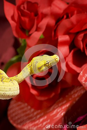 Serpente nelle rose