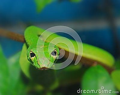 Serpiente verde en el jardín