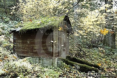 Service shed in an old growth forest preserve