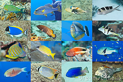 Set of 16 fishes