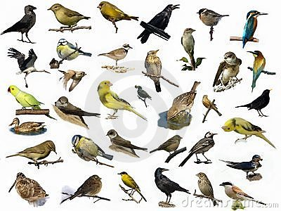 set-35-different-photographs-birds-14456