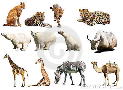 Set of  animals. Isolated with shadows